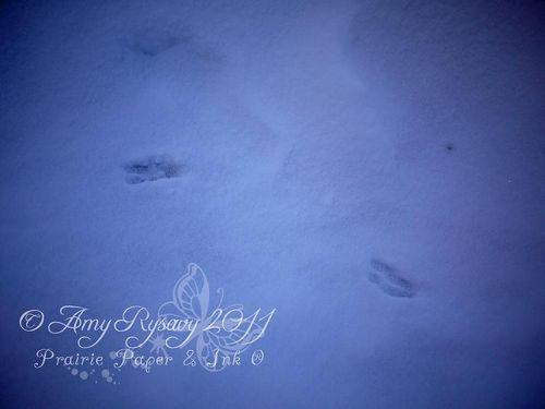Jan 17 2011 deer tracks