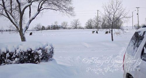 Jan 17 2011 deer